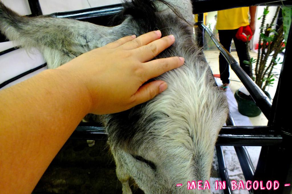I'm petting the donkey's head