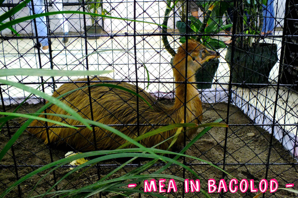 Zoofari 2016 - Mea in Bacolod 4