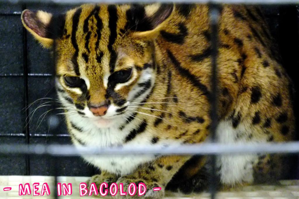 Zoofari 2016 - Mea in Bacolod 9