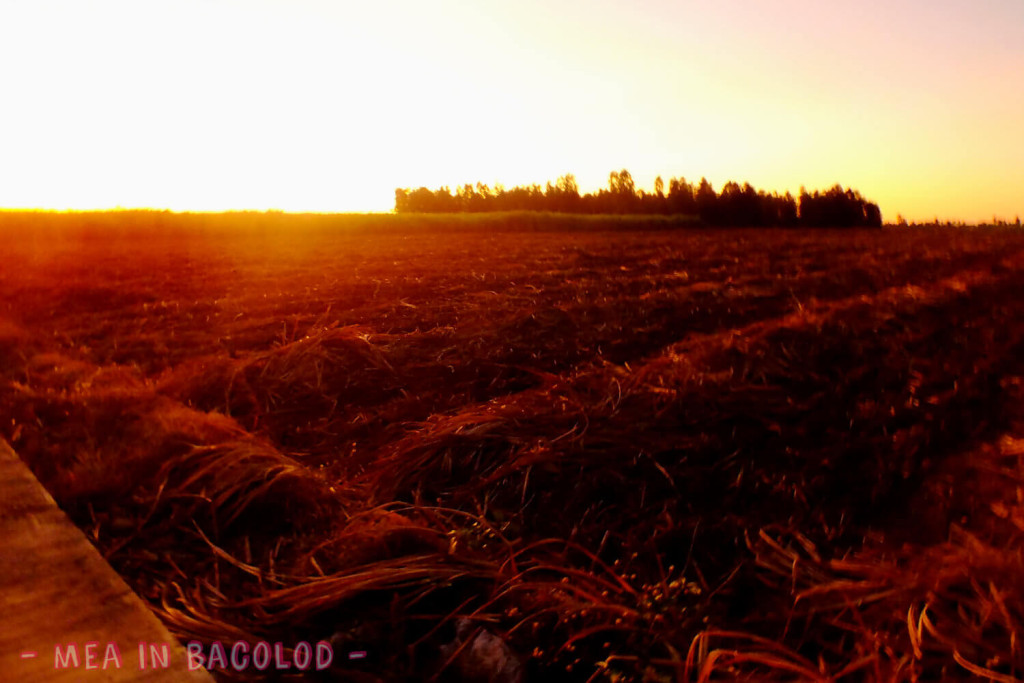 Sunsets and Colors Negros Occidental